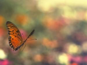 butterflyinflightbyjoelolives-300x225